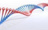 Sequential gene-editing tool