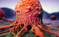 Intra-tumour heterogeneity across human cancer genomes